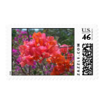 Tropical Pink Bougainvillea Stamp
