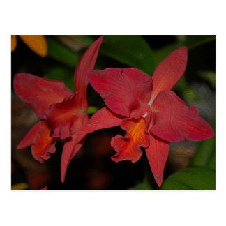 Tropical pink cattleya orchid flower postcard