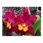 Tropical pink fuschia cattleya orchid flower post cards