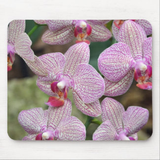 Tropical pink moth orchid flowers mouse pad