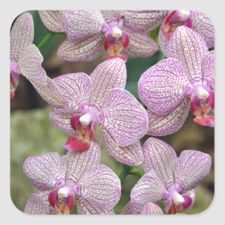 Tropical pink moth orchid flowers square sticker