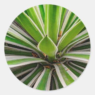 Tropical Plant Detail, Botanic Garden, Guayaquil Classic Round Sticker