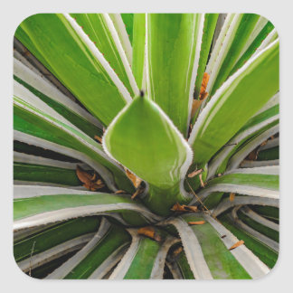 Tropical Plant Detail, Botanic Garden, Guayaquil Square Sticker