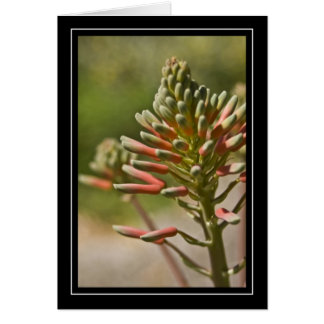 Tropical Plant Note Card