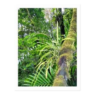 Tropical Plants at El Yunque National Rainforest Postcard