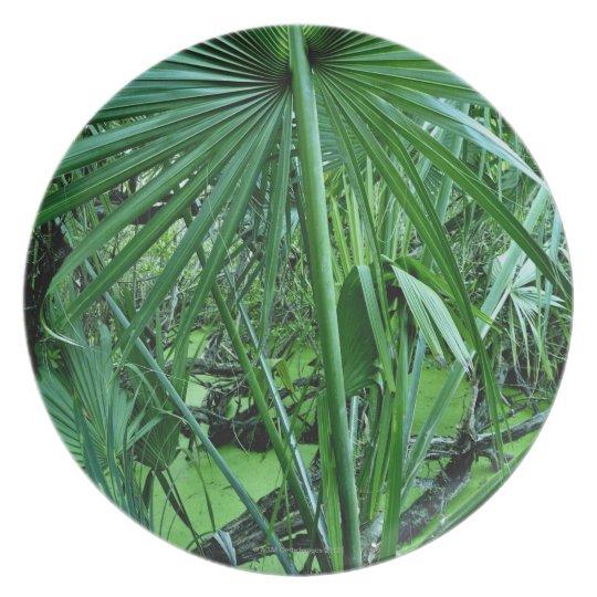 Tropical plants in salt pond dinner plate