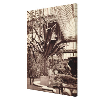 Tropical Plants in the Egyptian Room, Crystal Pala Canvas Print