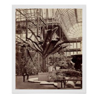 Tropical Plants in the Egyptian Room, Crystal Pala Poster