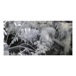 Tropical Plants/Infrared Photography Card