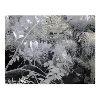 Tropical Plants/Infrared Photography Postcard
