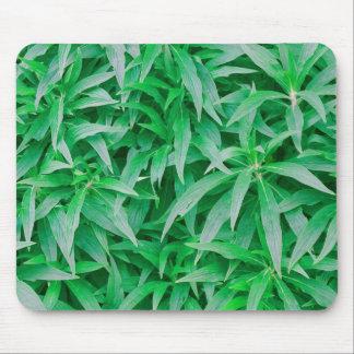 Tropical Plants photo painting mousepad