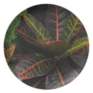Tropical Plants Party Plate