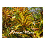 Tropical Plants Postcard