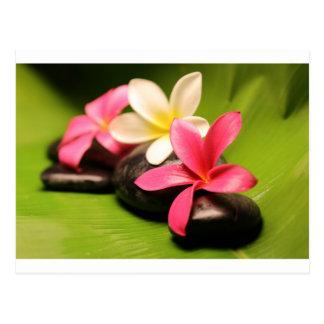 tropical plumeria flowers on stones postcard