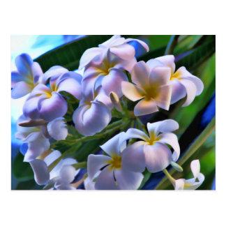 Tropical Plumeria Flowers Postcard