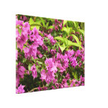 Tropical Purple Bougainvillea Canvas Print