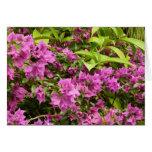 Tropical Purple Bougainvillea Flowers Greeting Card