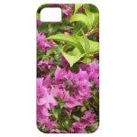 Tropical Purple Bougainvillea Flowers iPhone 5 Cases