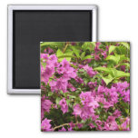 Tropical Purple Bougainvillea Flowers 2 Inch Square Magnet