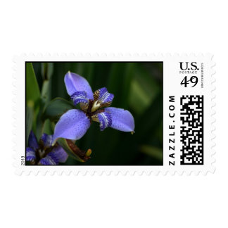 Tropical purple flower blossom up close stamps