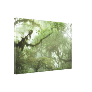 Tropical Rain Forest Canopy Gallery Wrapped Canvas