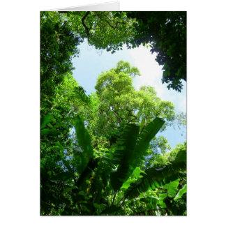 Tropical Rain Forest Card