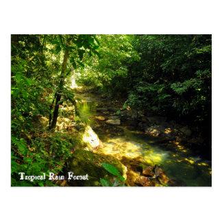 Tropical Rain Forest Post Card