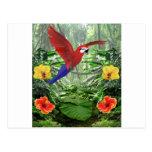 Tropical Rain Forest Postcard