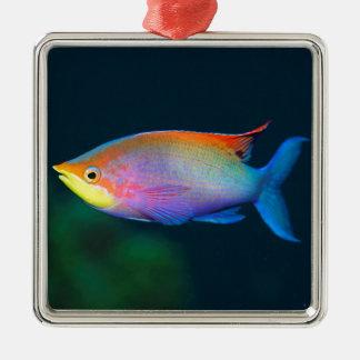 TROPICAL RAINBOW FISH SQUARE HANGING ORNAMENT
