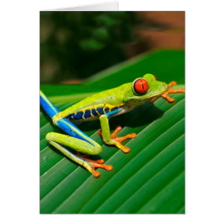 Tropical rainforest green red-eyed tree Frog Card