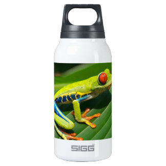 Tropical rainforest green red-eyed tree Frog Insulated Water Bottle