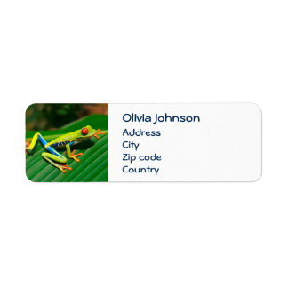Tropical rainforest green red-eyed tree Frog Label