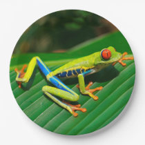 Tropical rainforest green red-eyed tree Frog Paper Plate