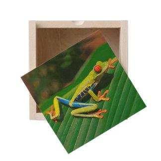 Tropical rainforest green red-eyed tree Frog Wooden Keepsake Box