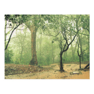 Tropical Rainforest Western Ghats India Postcard