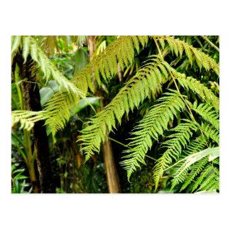 Tropical Ravine  Postcard