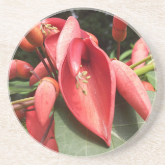 Tropical Red Coral Flower Coaster