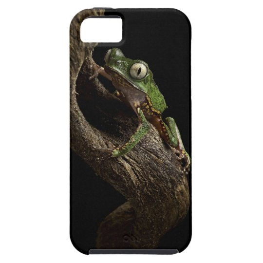 Tropical red eyed tree frog iPhone SE/5/5s case