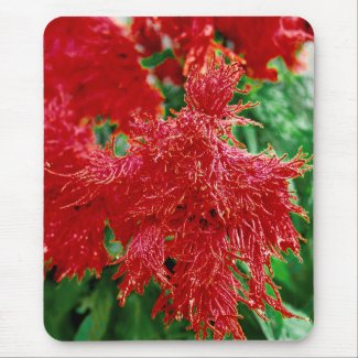 Tropical Red Flower Floral Closeup mousepad