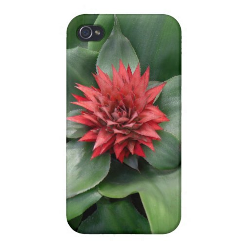 Tropical Red Flower - Case For iPhone 4