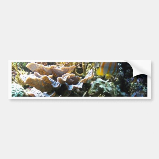 Tropical Reef 2 Bumper Stickers