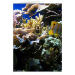 Tropical Reef 2 Cards