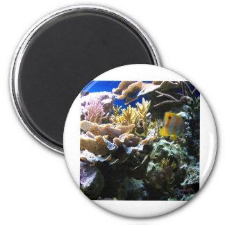 Tropical Reef 2 Magnet