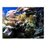 Tropical Reef 2 Postcard