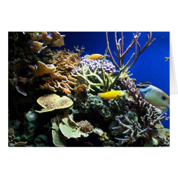 Tropical Reef 3 Card