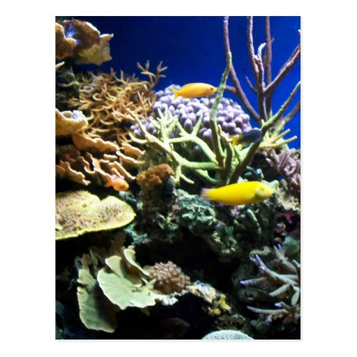 Tropical Reef 3 Post Cards