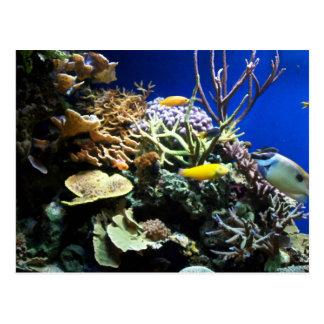 Tropical Reef 3 Postcard