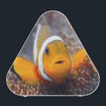"""Tropical reef fish - Clownfish Bluetooth Speaker<br><div class=""""desc"""">Tropical reef fish - Clownfish (Amphiprion ocellaris) Macro with shallow DOF. &#169; and &#174; Bigstock&#174; - All Rights Reserved.</div>"""