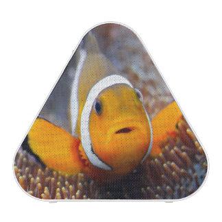 Tropical reef fish - Clownfish Bluetooth Speaker