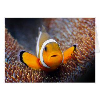 Tropical reef fish - Clownfish Cards